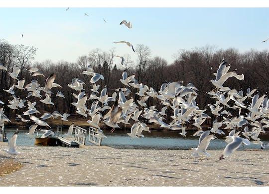 Pymatuning State Park Birds