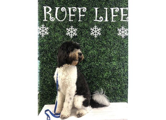 Ruff Life Dog Selfie