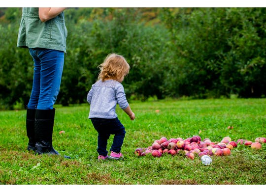 Brant's Apple Orchard apples and baby