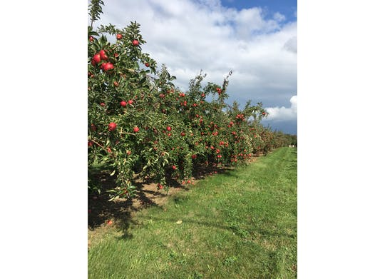 Cold Spring Orchard