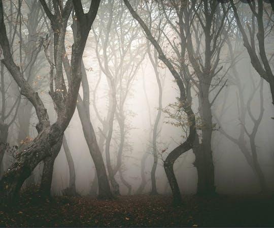 Brant's Haunted Woods